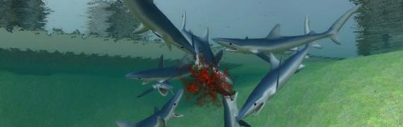 shark_models.zip
