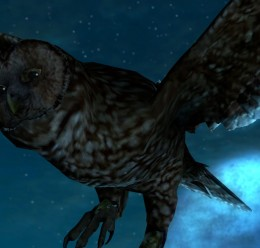 animatedowls.zip For Garry's Mod Image 3