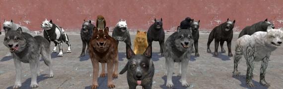 Animal Pack (Dragon Age)