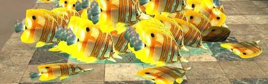 angelfish.zip