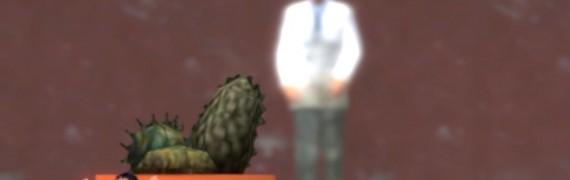 kleiner_+_cactus_bg.zip