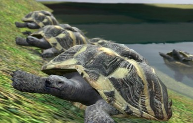 turtle.zip For Garry's Mod Image 1