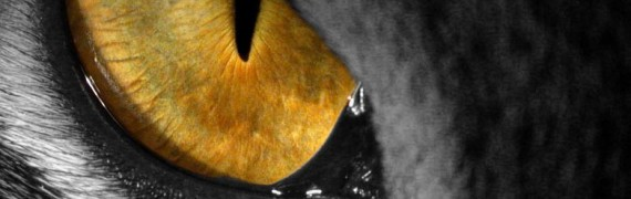 eye_of_the_tiger_startup.zip