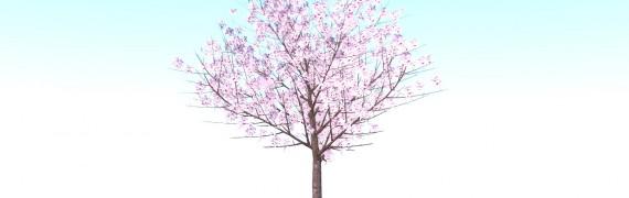 4 Japanese Cherry Blossoms/Sak