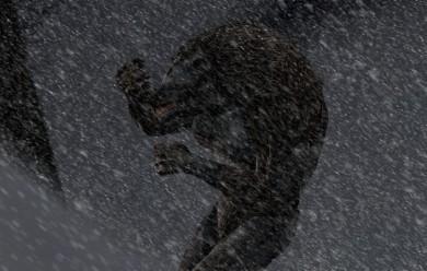 Dragon Age: Origins - Werewolf For Garry's Mod Image 2
